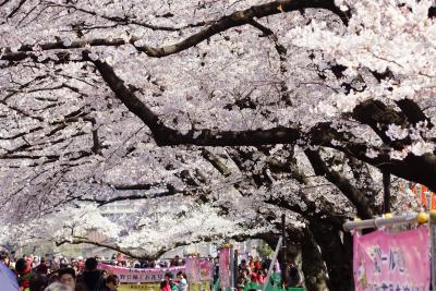 上野 桜に見入る