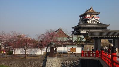 清須城の桜 -1-