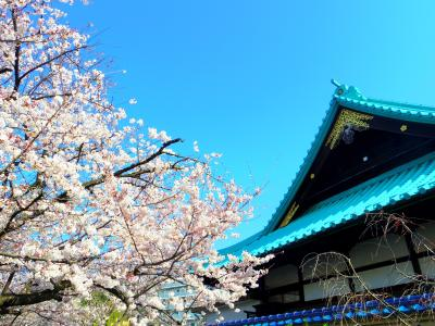 毎年恒例の桜坂 2015+α