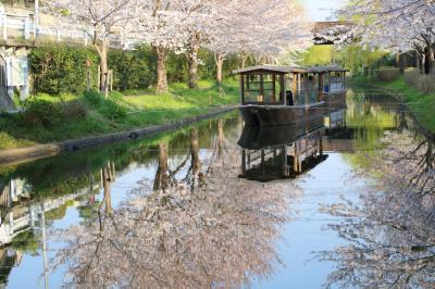 京都を歩く(223) 山科・伏見・宇治 桜めぐり