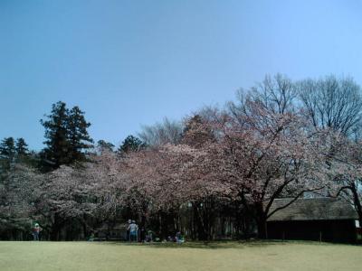 花と緑で季節の変化を実感。