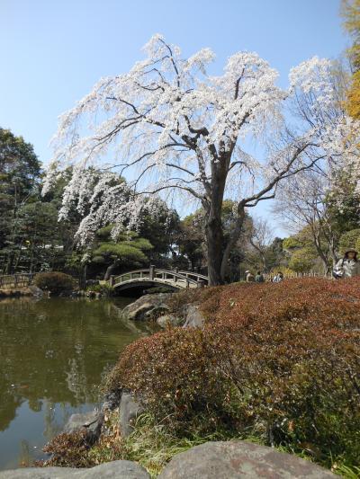 平塚総合公園を散策そして桜は