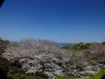 2015桜だより IN 天草(千巌山と鶴葉山公園)