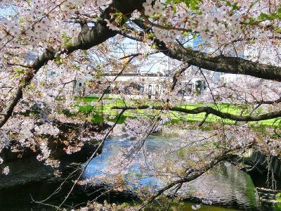 満開のさくらと神田川・高戸橋の都電 3景