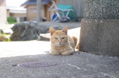 猫の島③姫島