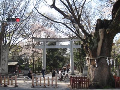 桜吹雪舞う 大國魂神社とその周辺