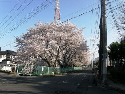 早朝ウォーキングで桜を愛でながら市内各地を巡る・・・⑧青葉から野久喜遊園まで