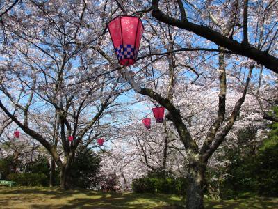 2015年 青空に誘われ再び須恵健康公園に花見に行きました。若山公園にも行きました。