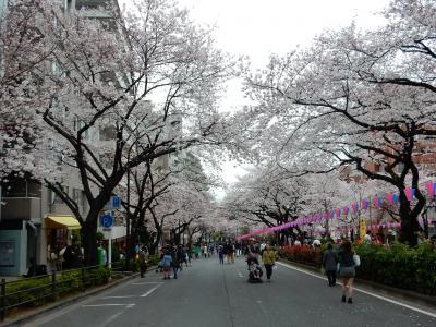 東京2015桜 【3】浮間公園~播磨坂~神田明神