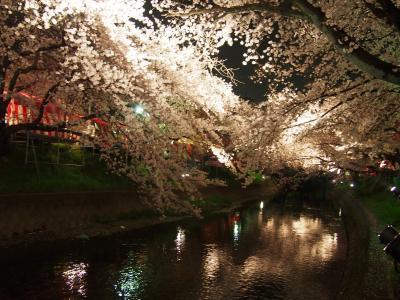 五条川夜桜見学。