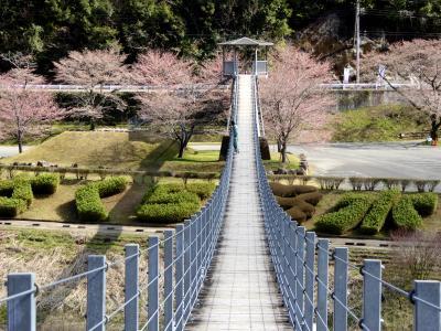 2015早春の九州路 〈熊本県下有数の桜の名所〉市房ダム湖の桜の見ごろにはちょっと早かった