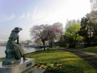 早朝ウォーキングで桜を愛でながら市内各地を巡る・・・⑭久喜・菖蒲公園の桜・・後篇