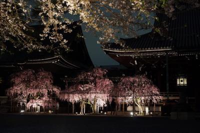 京都 仏光寺の桜 20150404