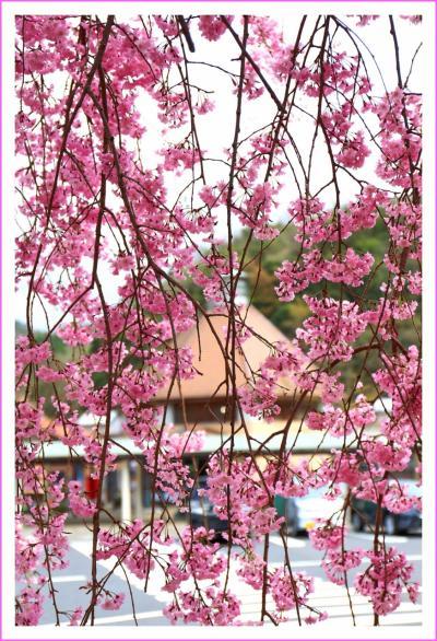 Solitary Journey [1562] ポカポカ陽気の中、春の爽やかな風を受けて中国山地を走る。<山賊錦店と中国山地里山春景色>島根県鹿足郡