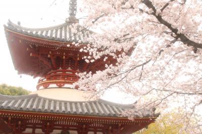 桜の季節に訪れる2度目の川越・喜多院~曇天の花見撮影散策は寺社の建築物と共に