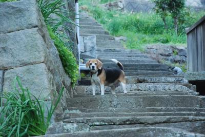 ワンちゃんが案内する高見島の石垣集落(香川)