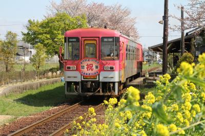 菜の花の北条鉄道