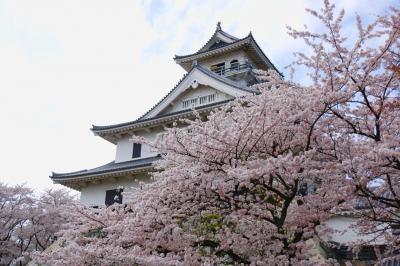 琵琶湖の桜を訪ねて