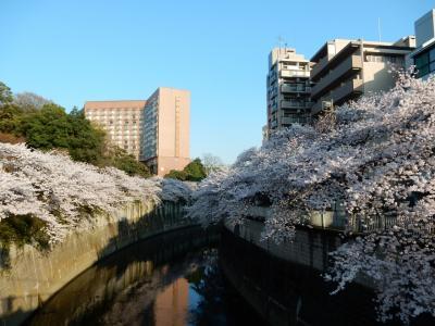 東京2015桜 【8】神宮外苑~神田川(江戸川橋~面影橋)
