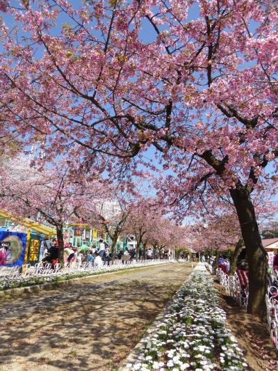 春爛漫の川口グリーンセンター♪