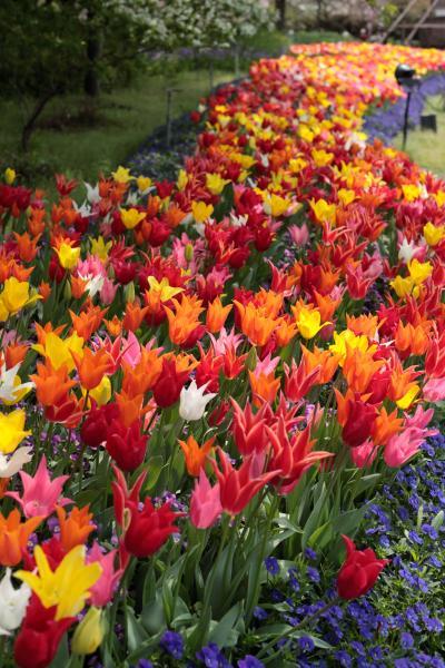 なばなの里 春の花まつり