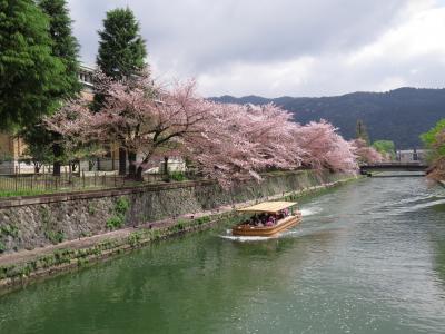 京都の桜2015  もうひとつの白川沿いの桜(地下鉄東山駅から岡崎公園まで)