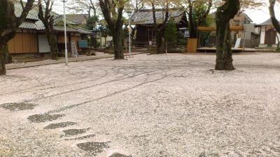 日常の合間に見かけた桜じゅうたん~我が地元の八坂神社にて