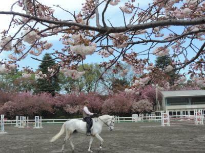 八重桜を訪ねて砧公園から馬事公苑へ