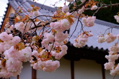 2015 愛しの明日香村 花の咲く橘寺 編