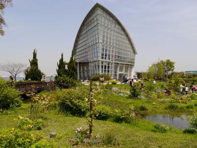 名古屋港 ワイルドフラワーガーデン ブルーボネットの春