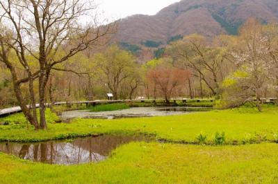 春の箱根湿生花園さんぽ