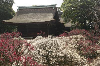 関西旅行記~2015 大阪・藤井寺市編~