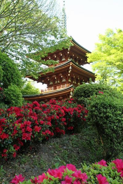 石楠花の岡寺 新緑の候