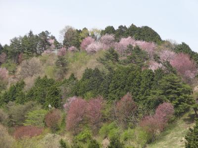 埼玉県小川町低山ハイキング②(大霧山)
