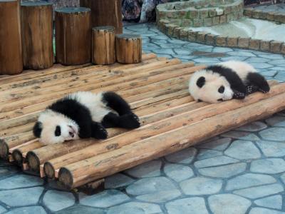 ワンコと一緒に白浜へ 2〜パンダ〜