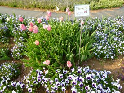 花いっぱい花フェスタ~長島町