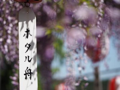 はらぺこ散歩道 藤棚&石楠花(豊田~俵山)