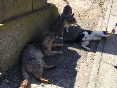 牛タン+猫島ツアー