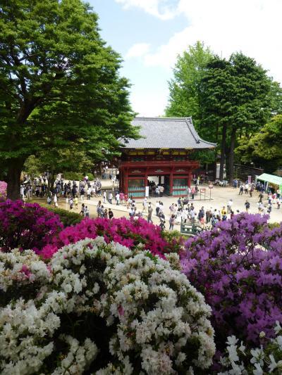 つつじ祭(根津神社)と 谷中ちょこっと散歩 in GW