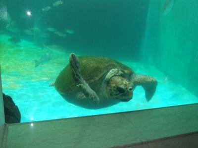 穴場の姫路市立水族館