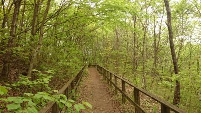 新緑の和泉葛城山