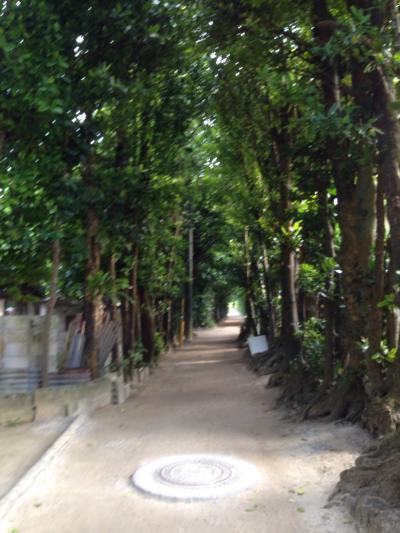 備瀬のフクギ並木道