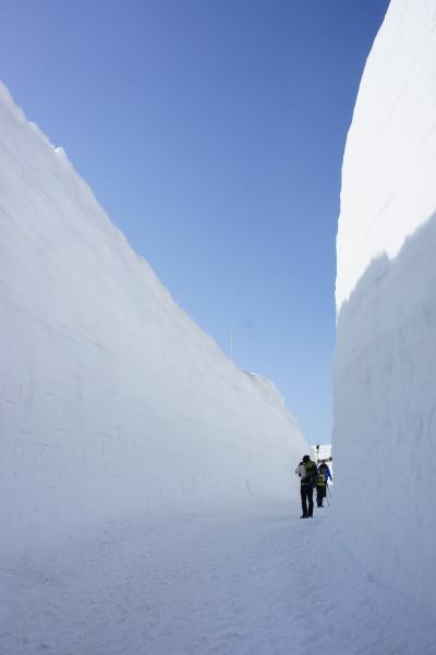 待ち遠しかった雪国の春到来。立山雪の大谷にて