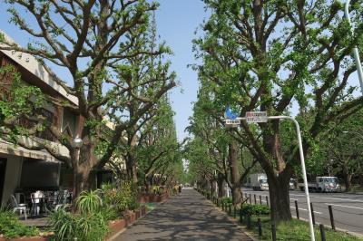 2015年05月 明治神宮外苑の散歩と朝食を食べてきました。