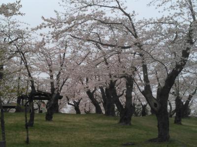 2015 4月 森町のお花見