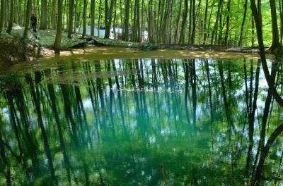 雪深き南越後の遅い春(2) ~残雪に若葉の緑が映えるブナ林~