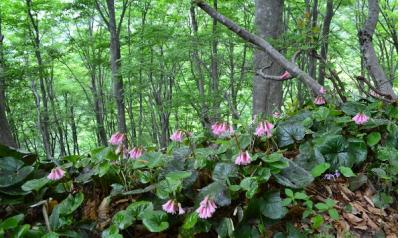 春の花咲く・高島トレイル