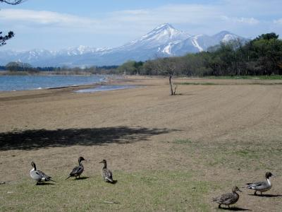 鶴ヶ城の桜を見て猪苗代湖にも寄りました。