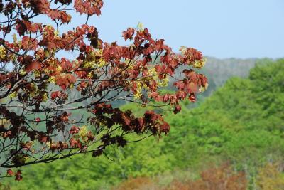 新緑と紅葉が同時に現れる二股温泉を訪ねて(北海道)