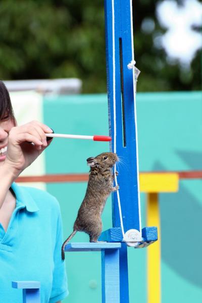 風が強い新緑の初夏は地元埼玉こども動物自然公園を満喫(3)アニマルステージやコアラ展&動物園のさまざまなスポット